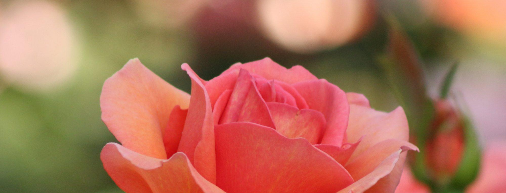 cropped-pexels-photo-459424-e1518992734570.jpeg